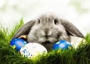 Velikonoční nabídka